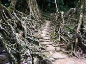 living_root_bridges_3