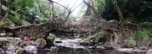 living_root_bridges_5