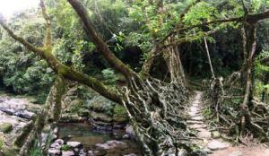 living_root_bridges_6