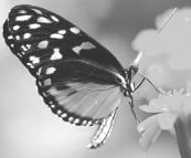 sourav-roy-butterfly