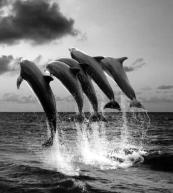 sourav-roy-river-dolphin